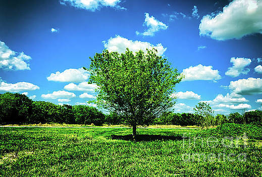One Tree Under Heaven by JB Thomas