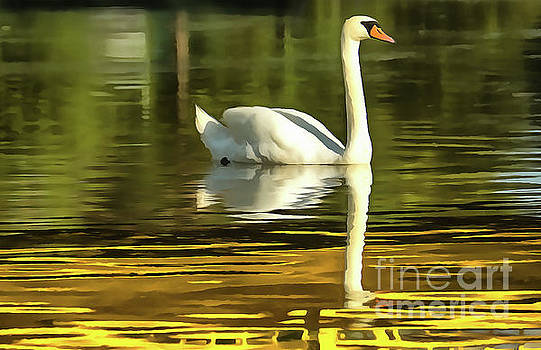 One white swans on lake by Odon Czintos