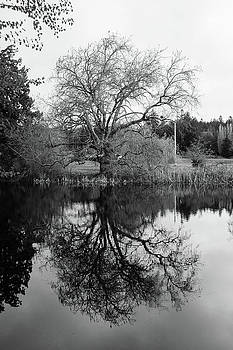 Marilyn Wilson - Tree Reflections - bw