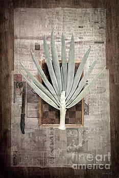 Onion by Linda Lees