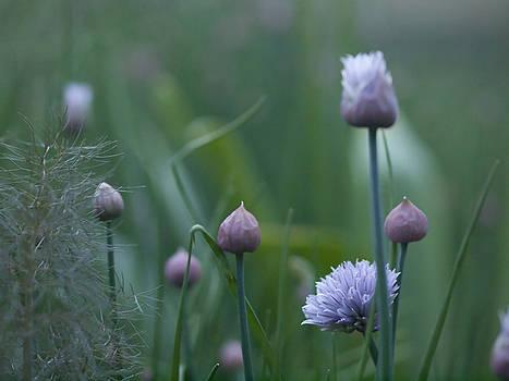 Onion Plant by Valerie Morrison