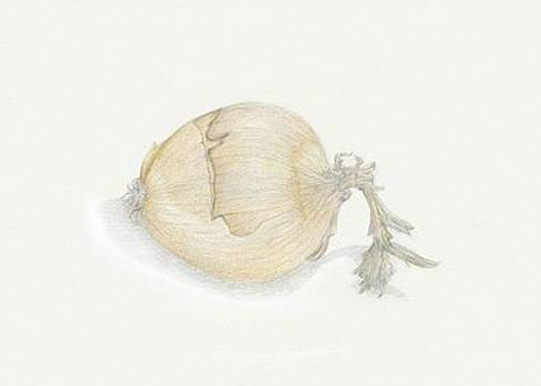Onion by Tara Poole
