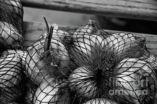 Onions in Fishnet Stocking by Jay Ressler
