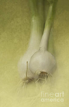 Onions by Pam  Holdsworth