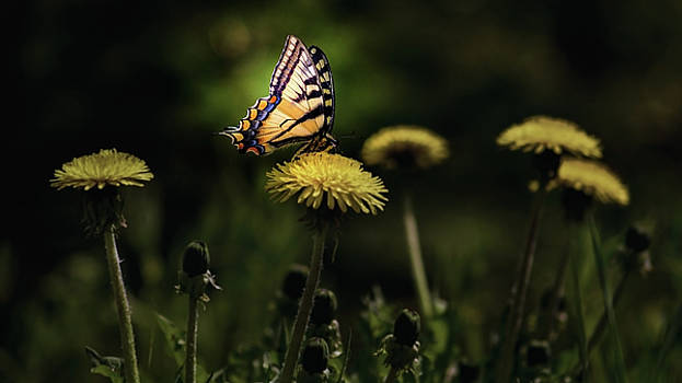 Only A Butterfly by Ron Day