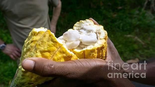 Open Coco Fruit by Mioara Andritoiu