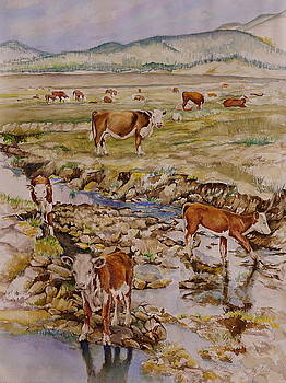 Open Range by Jackie Langford