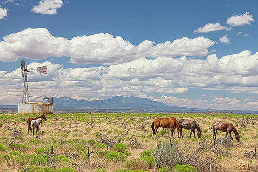 Open Range Wild Horses Grazing by James BO Insogna