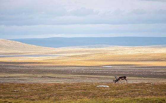 Open Wilderness by Mikko Karjalainen