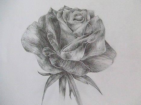 Opened Rose by Rihab Nasser