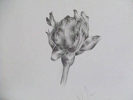 Openning Rose by Rihab Nasser