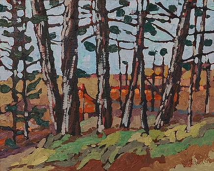 Opinicon November Forest by Phil Chadwick