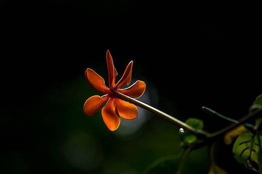 Ramabhadran Thirupattur - Orange And Black