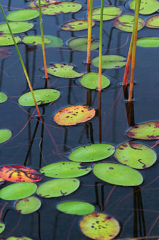 Juergen Roth - Orange and Green Water Lily Pads