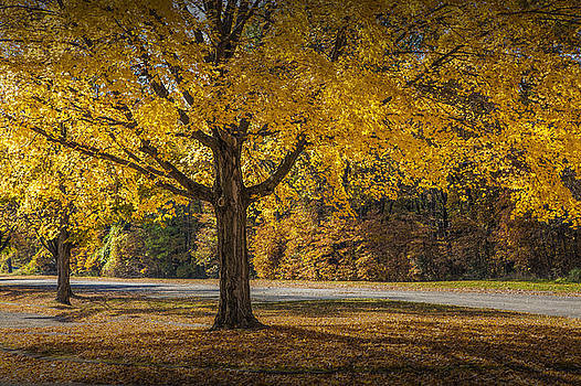 Randall Nyhof - Orange Autumn Foliage in the State Park by Gun Lake