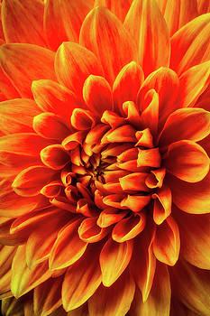 Orange Beauty by Garry Gay