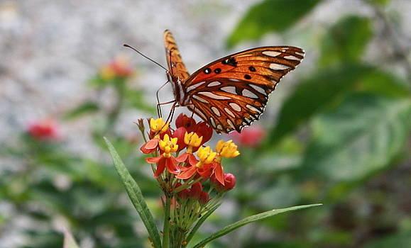 Orange Beauty by Judith Morris