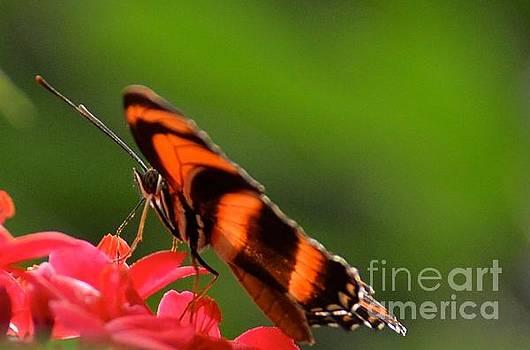 Orange Beauty by Stephanie  Bland