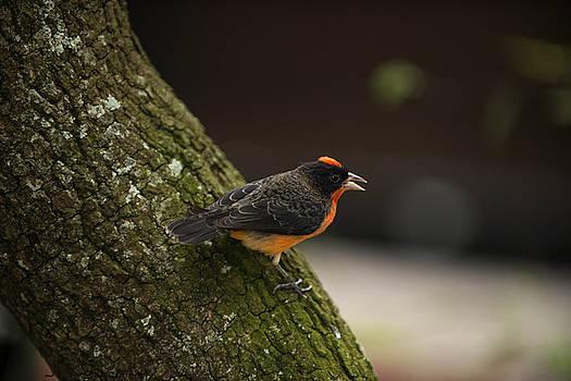 Orange Bird by Sunman Studios