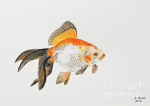 Orange black and white goldfish by Stefanie Forck