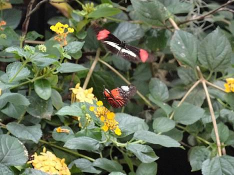 Orange Black Butterfly Yellow Flowers by Mozelle Beigel Martin