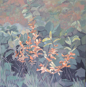 Orange Blossoms by Joan McGivney