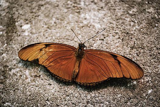 Orange Butterfly by Brad Thornton