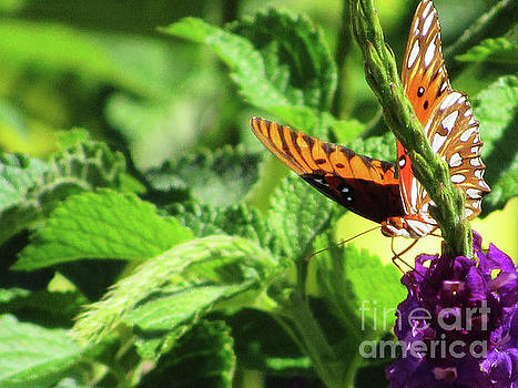 Orange Butterfly Green Leaves by Ron Tackett