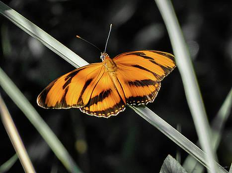 Orange butterfly by Helissa Grundemann