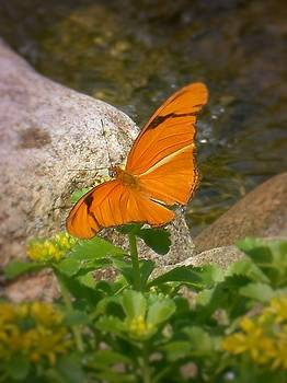 Orange Butterfly by Leeann Stumpf