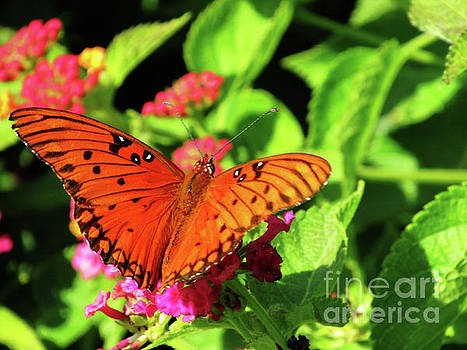 Orange Butterfy on Green Leaves and Pink Flowers by Ron Tackett