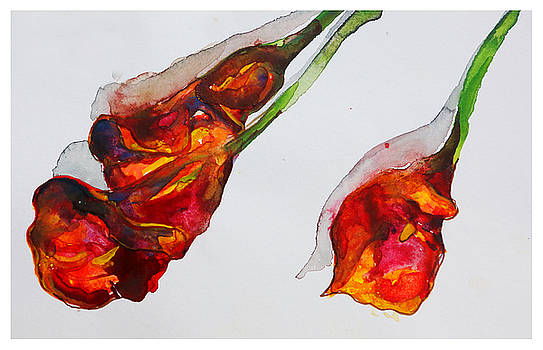 Orange Calas by Natalia Stahl