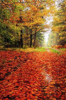 Orange carpet by Dmytro Korol