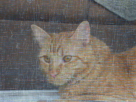 Orange Cat Behind A Screen by Guy Whiteley