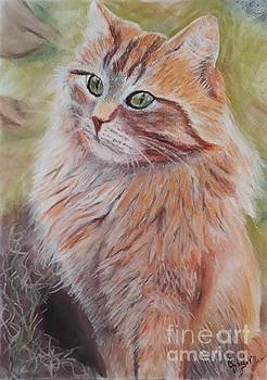 Orange Meow by Cybele Chaves