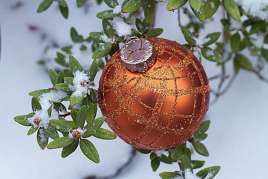 Orange Christmas ball on plant with fresh snow by William Lee
