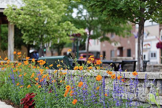 Orange Cosmos Flowers Downtown Decorah Iowa  by Kari Yearous