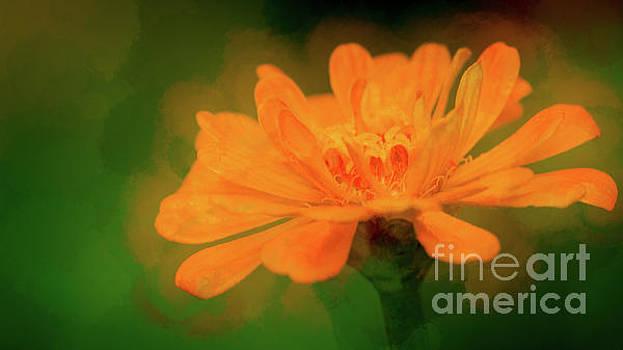 Orange Crush by Doug Sturgess