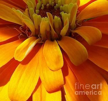 Orange Crush by Elizabeth Briggs