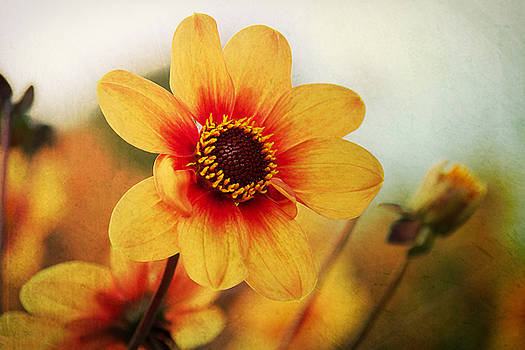 Angela Doelling AD DESIGN Photo and PhotoArt - Orange Dahlia