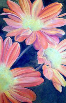 Orange Daisies by Felicia Cawley