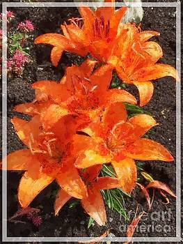 Orange Day Lilies Painted by Barbara Griffin