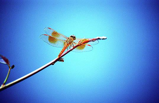 ORANGE dragonfly by Farah Faizal