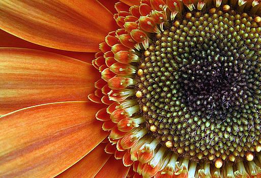 Orange Energy by Dan Holm