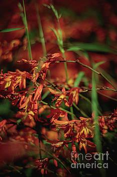 Marc Daly - Orange Flower 1