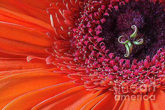Orange flower by Jim Wright