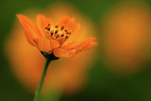 Mahesh Balasubramanian - Orange Flower