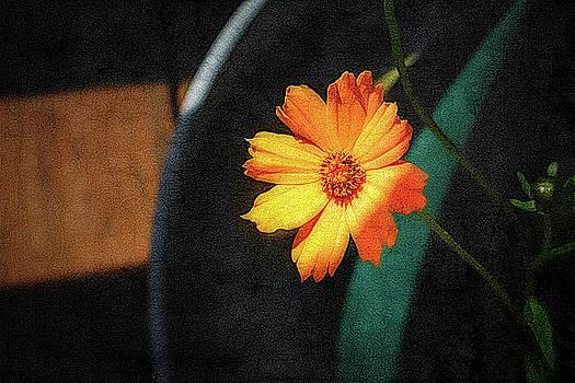 Orange Flower by Robert Meyerson