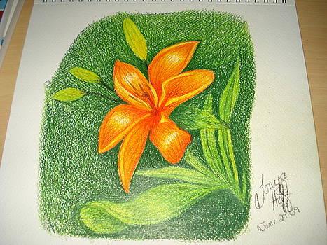 Orange Flower by Tonya Hoffe
