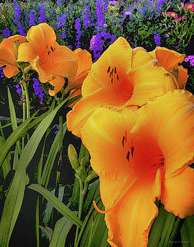 Orange Flowers by Coleman Mattingly